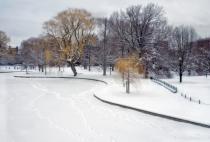 Public Garden in Winter