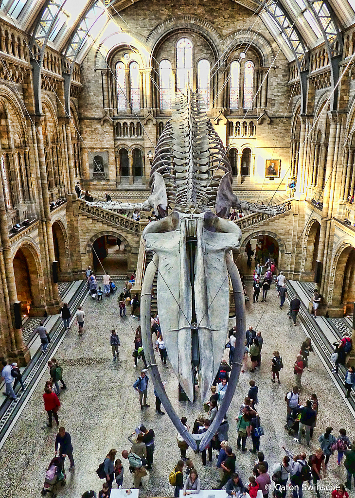 The Natural History Museum, London, UK