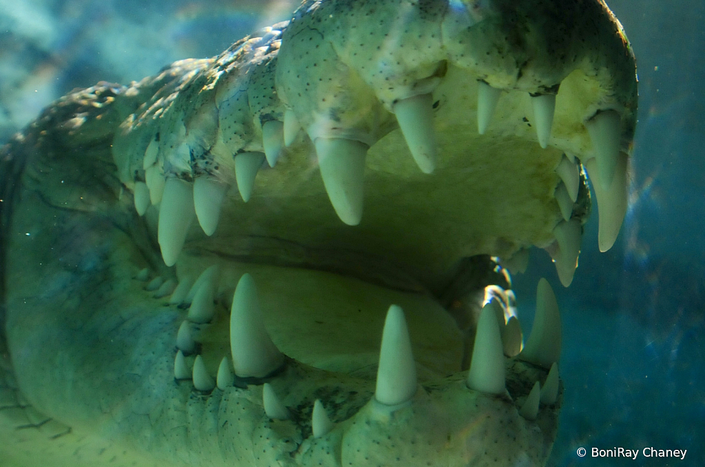 Alligator Alley - ID: 15788228 © BoniRay Chaney