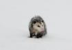 Mr. Possum