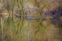 Essency Creek Pond