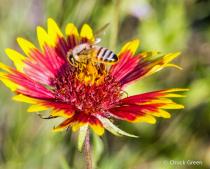 We Bee Collecting Pollen