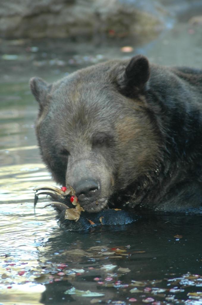 A bearyy breakfast in bath.