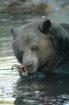 A bearyy breakfas...
