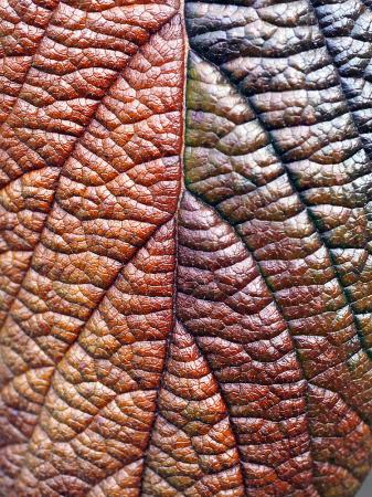 Rainbow Leaf II