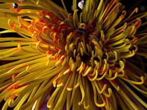 Floral Spaghetti