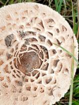 Mushroom Lace