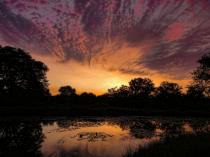 Greenbelt Pond At Sunrise