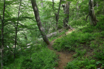 Trail in the southern beech forest