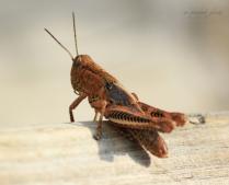 Eye of the Grasshopper