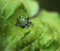 Amphibios