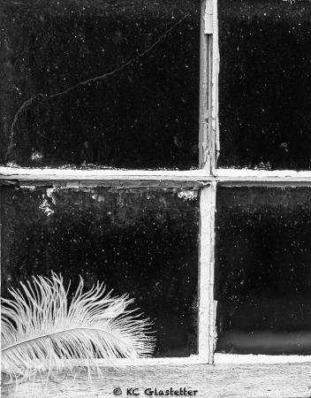 Feathery Window