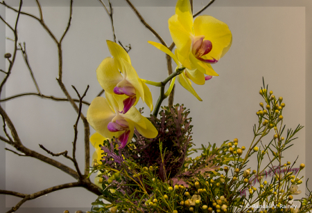 Arranged Yellow Orchid