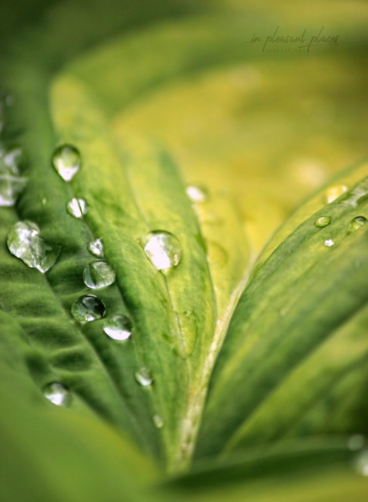 Blessing of Rain