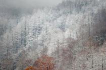 Smoky Mountain snow 2