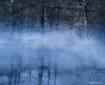 Fog on Cypress Po...