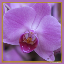 Purple Orchid in Pittsburgh