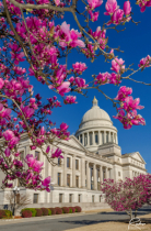 Spring Morning at the Capitol
