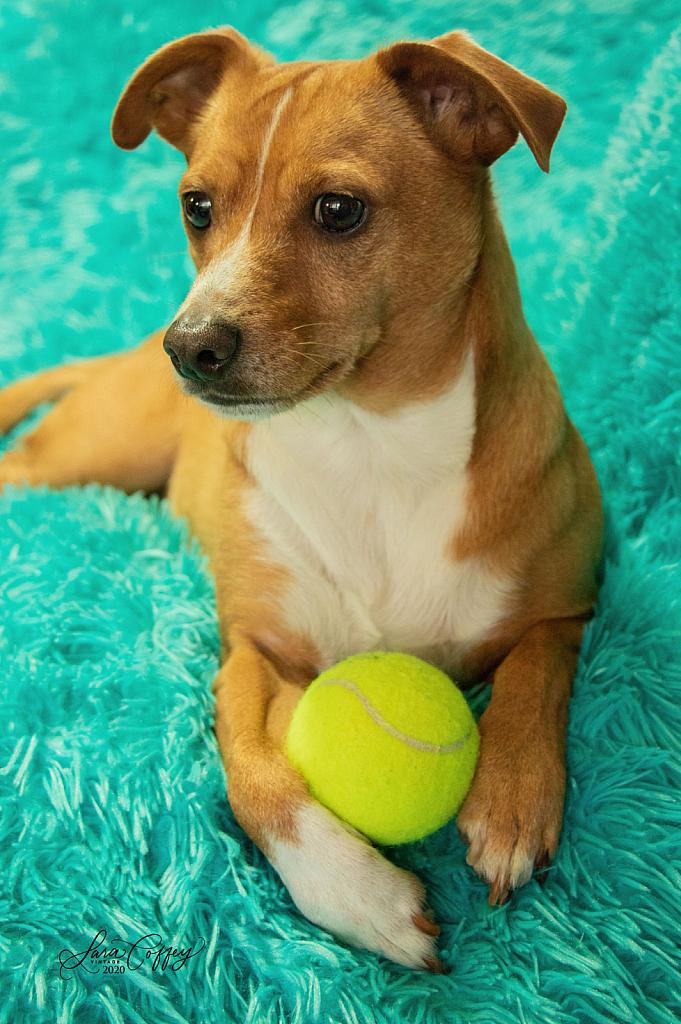 Fetch Anyone?
