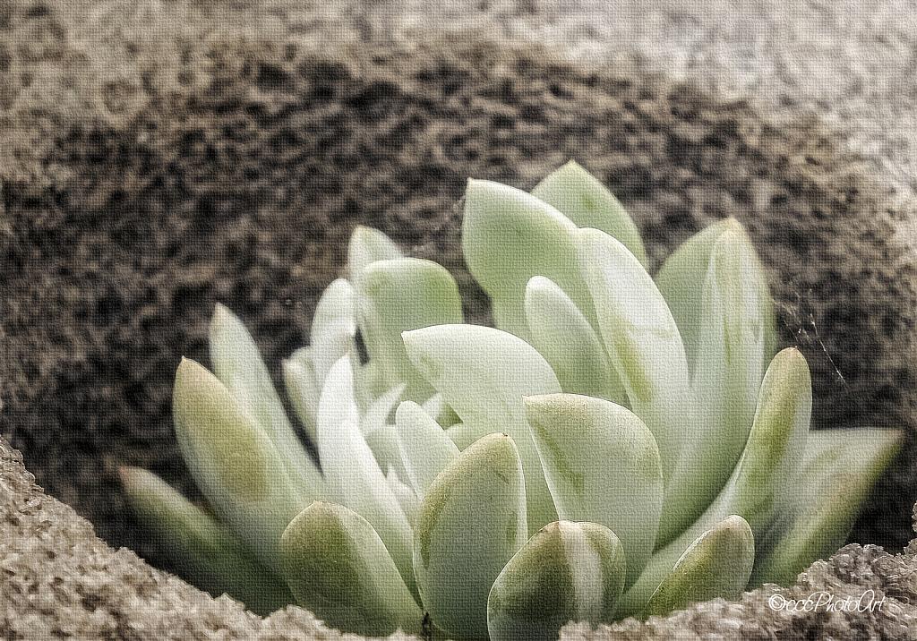 Stone Nest - ID: 15796855 © Candice C. Calhoun