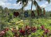 I Love Bali!