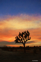 Wildfire Sunset #2