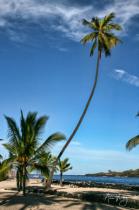 kiʻekiʻe