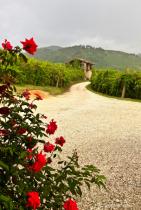 Italian Vineyard Road
