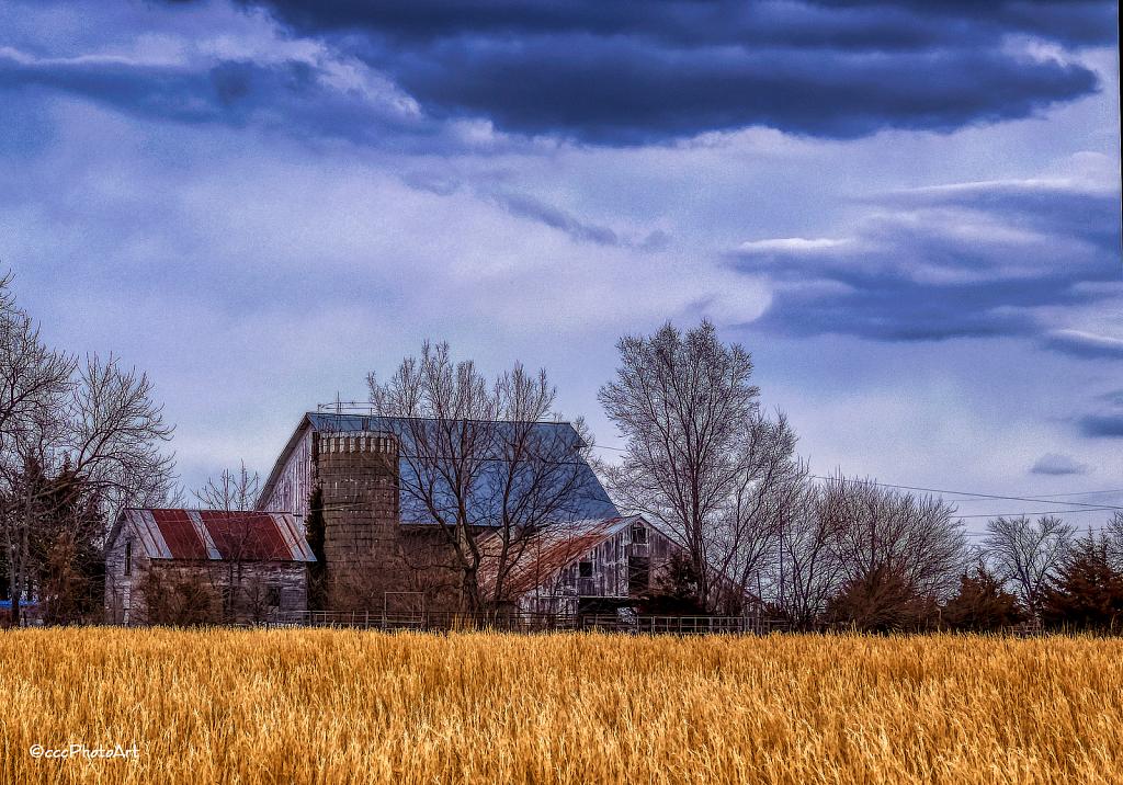 Wheat Field Find - ID: 15805417 © Candice C. Calhoun