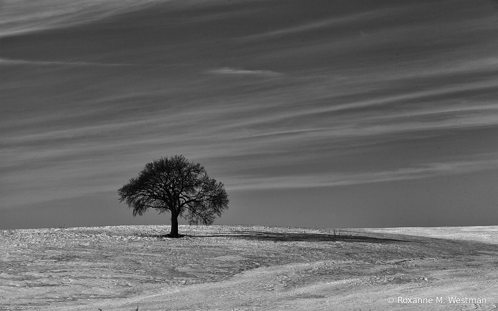 Lone tree on I94 - ID: 15806914 © Roxanne M. Westman