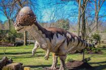 Pachycephalosaurs