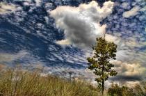 Grass, Tree And Sky