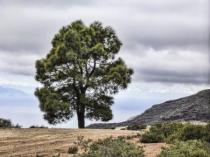 Single Tree on the Mountain