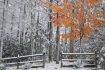 Early Snow Fall