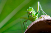 A Portrait of Grasshopper