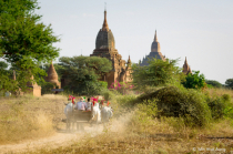 Ox Carriages at Bagan