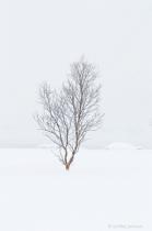 Winter Tree in Norway