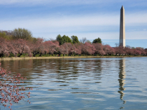 Early Spring at the Tidal Basin