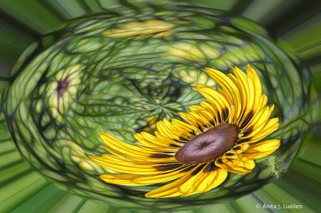 Petals With A Twist