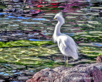 Egret at San Diego Event