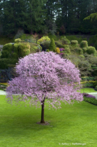 Lone Tree in Sunken Gardens