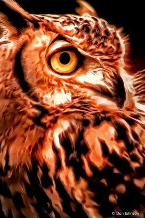 Artistic Owl Close Up 11-10-19 127