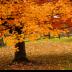 © Mark Seiter PhotoID# 15810381: fall colors