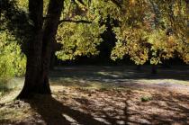 Backlit Patagonian oak