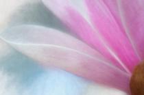 My Sweet Magnolia