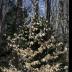 Just a Pretty Tree - ID: 15810766 © deb Wright