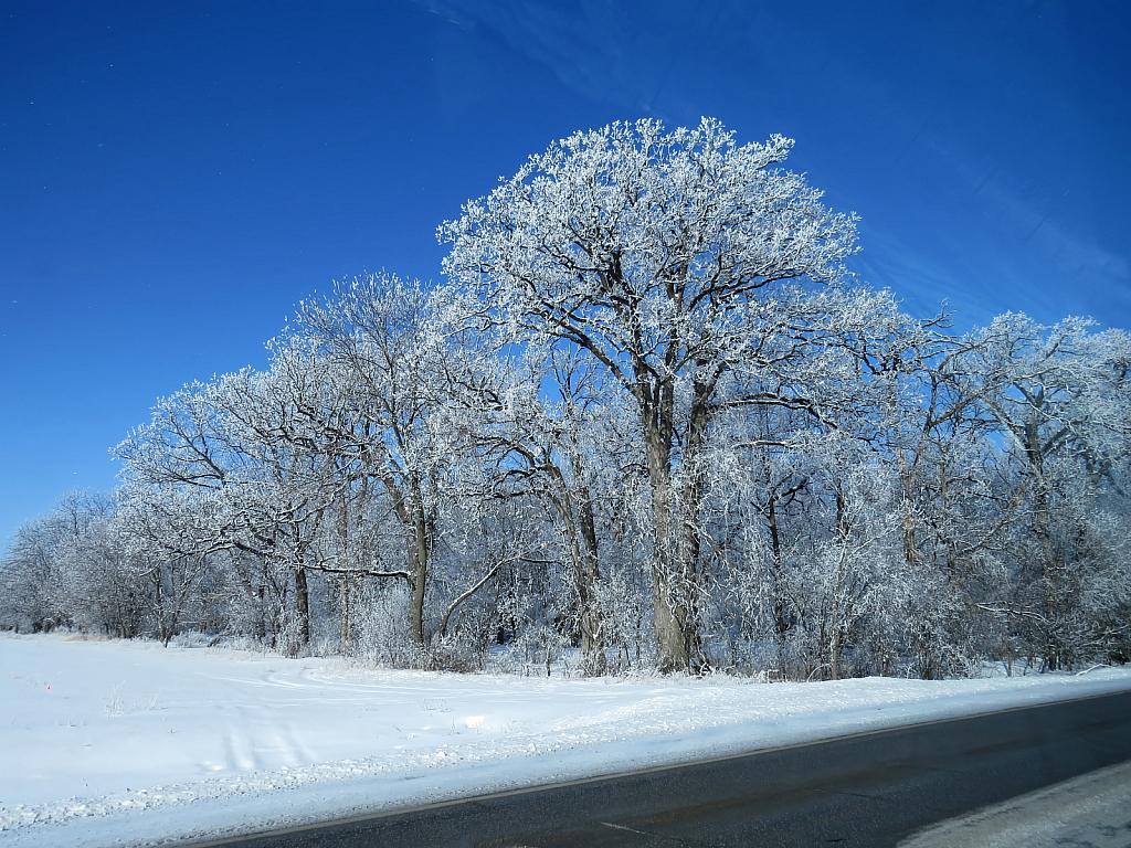 Iowa Country Winter - ID: 15811029 © Carolyn  M. Fletcher