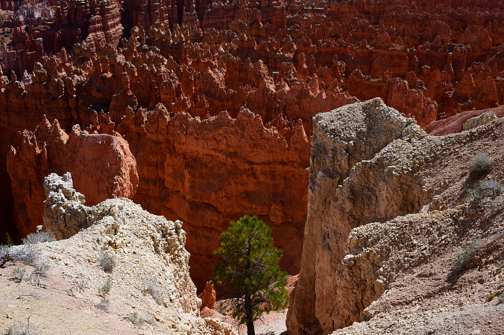 Lone Tree at Bryce Canyon - ID: 15811143 © William S. Briggs