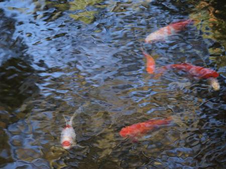 The impressionist pond