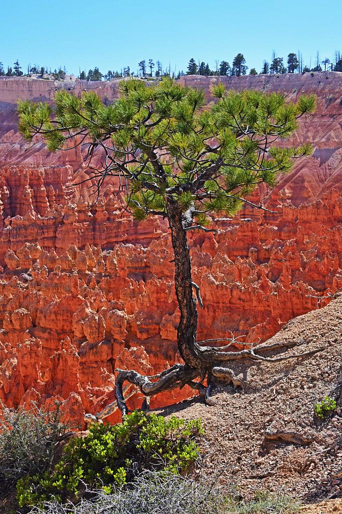 On The Edge! - ID: 15811197 © William S. Briggs